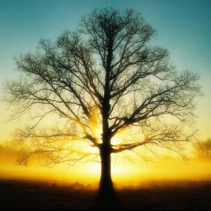 Pohon Tumbang dan Ceritanya