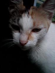 Download 95+  Gambar Kucing Ompong Terlihat Keren